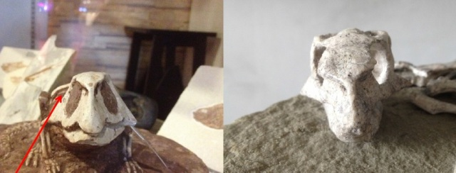 (LEFT) Entirely wrong head shape of a 'Psittacosaur' carving vs. (RIGHT) Actual juvenile Psittacosaur fossil specimen of comparible size